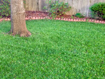 TLC lawn in MS
