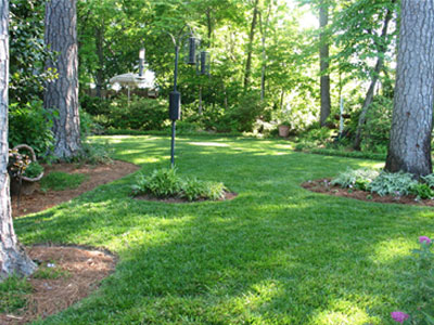 Titan Ltd. preforms well as demonstrated in this photo of a lush green lawn, in mostly deep shade.
