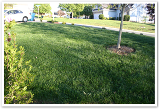 TLC PLus Mix Lawn 2008